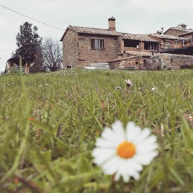 Wohnmobilstellplatz: holiday farm , Brunello Making - Agriturismo Il Cocco